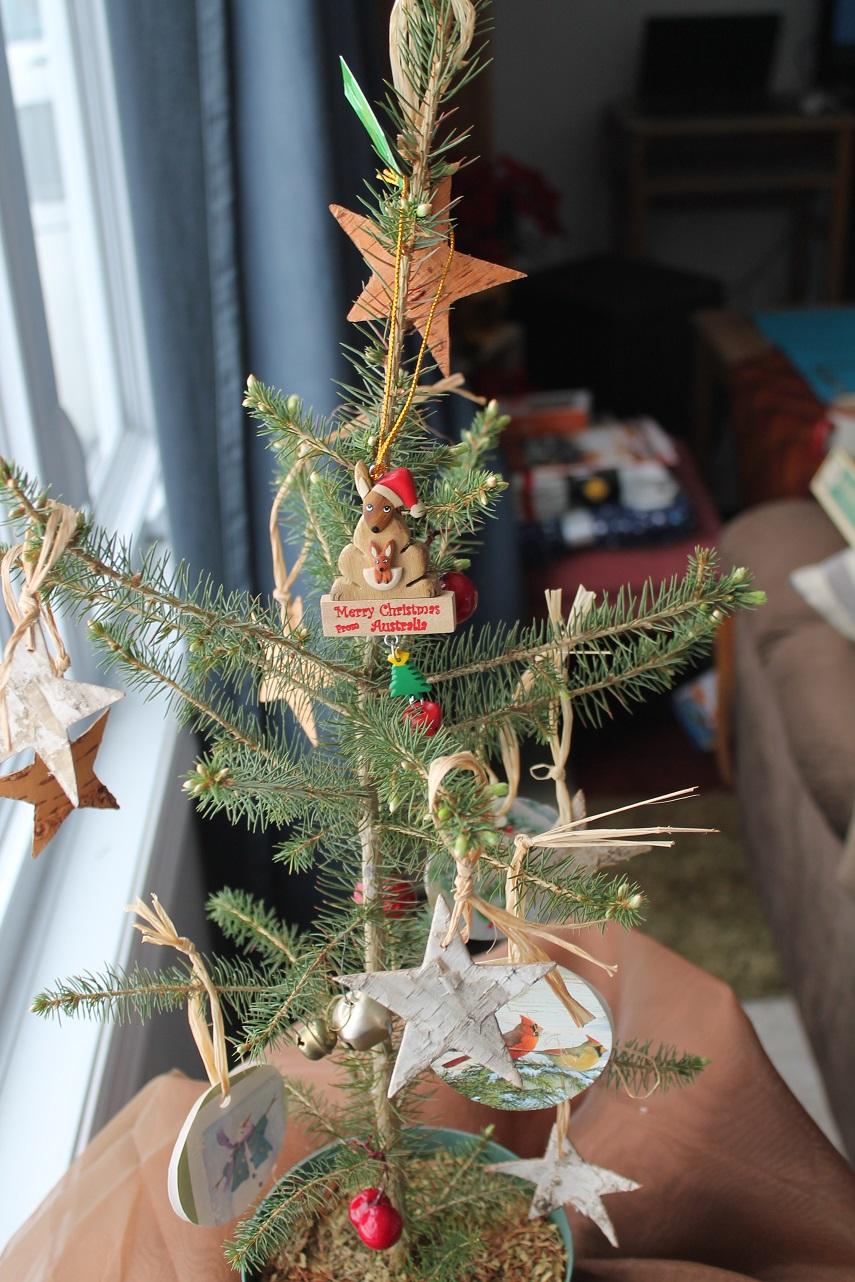 Real Live Christmas Tree